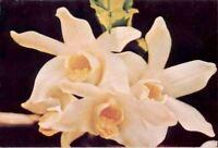 (fv9) Postcard: Orchids
