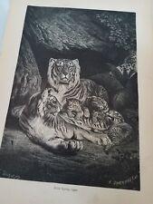 Kinsley. 1884 Mammals. Felis Tigris. Tiger, Antique Print, Africa-Gift.