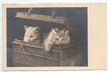 Animal CHAT carte photo deux chatons dans un panier