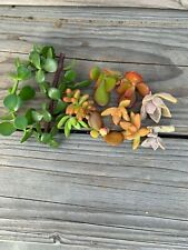 Mix Succulent Cuttings Plant Rare Plants Strings