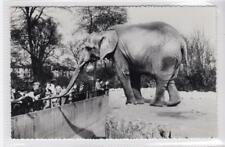 AFRICAN ELEPHANT: London Zoo postcard (C31358)
