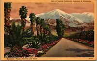 Vintage 1930's Snow Fruit Flowers along the Highway in California CA Postcard