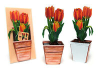 Pop-Up-3 D-Karte TULPEN: ein Blumentopf mit rötlichen Tulpen + Briefumschlag