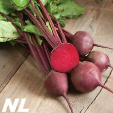 100Pcs Red Beetroot Vegetable Seeds Natural Product Rich Taste Plants Garden