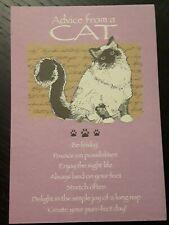 Birthday Card Cat