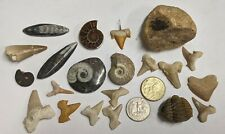 FOSSIL COLLECTION - Mosasaur Goniatite Ammonite Shark Trilobite (#U318)