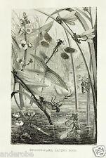 J.G.Wood,Cut 1885 Scarce Bw Dragonflies/Dragonfly/Dam selflies