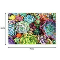 1000 Pieces Succulent Spectrum Plants Puzzle Adult Gift Children Holiday H4Y9