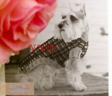 Vintage Knitting Pattern Dogs Classic Styled Jumper Coat In 5 Sizes. FREE UK P&P
