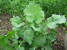 Kale, Siberian, great Deer food plot seed, 2 lbs