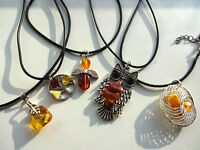 Lot of 10 Polished Baltic Amber Wolf Fang Amulet
