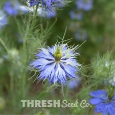 Garden Flower - Love-in-a-mist - 250 seeds + Free Gift