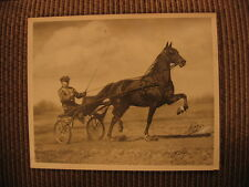 "Roadster Standardbred Bike Champion ""Little Clarence"" & Lloyd Teater Horse Photo"