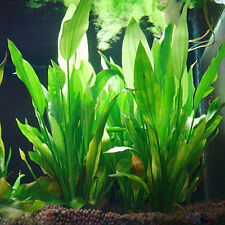 Fish Tank Aquarium Decor Green Plastic Water Grass Plant Ornament Agile