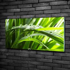 Glas-Bild Wandbilder Druck auf Glas 100x50 Blumen & Pflanzen Tropfen auf Gras