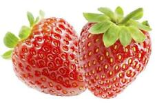 Feinschmecker-Erdbeere Senga-Sengana  Topfgewachsen verschiedene Abpackungen