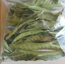 DRY MANGO Leaves 100% ORGANIC Tea Leaf (60 Dried Leaves Pack)
