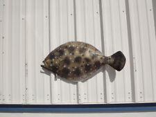 "35"" Flounder  Half Mount Fish Replica"