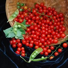 Tomato WORLD SMALLEST seeds Small Cherry red tomatoes Ukraine 20 seeds D
