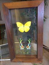 REAL Madagascan Sunset Moth Chrysiridia Rhipheus Orange Barred Sulphur Dbl Glass
