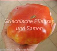 🔥 🍅 MONOMAKH`S CROWN russische Tomate 10 frische Samen riesige Monster-Tomaten