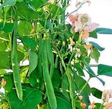 Vegetable Runner Bean Celebration - 35 seeds
