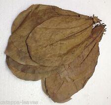 SONDERANGEBOT 100 Gr. Original Indische Seemandelbaumblätter Indian Almond