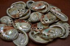 "10 PCS SMALL POLISHED BOTH SIDES RED ABALONE SEASHELL CRAFT 1 1/2"" - 2"" #7117S"