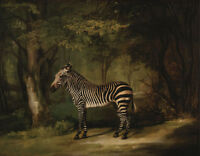 """perfect 36x24 oil painting handpainted on canvas """"Zebra """"@NO5732"""