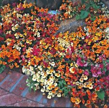 Nemesia Carnival Mix - Approx 1000 seeds - Annuals & Biennials