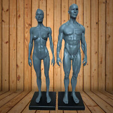 30cm Height Human Anatomy Skull Blood Sculpture Head Body Model Male + Female