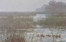 "Robert Bateman - ""Mallard Family - Misty Marsh"" limited edition print"