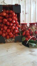 Pomodorino del Piennolo del Vesuvio D.O.P. Confezione Regalo da 1,5 kg