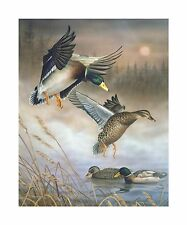 "19 ""Early Morning Whisper"" Ducks 16x20 Canvas Print by Robert Metropulos"