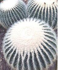 WHITE BARREL CACTUS (Echinocactus grusonii v. Albispinus) 10 seeds