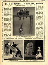 Käthe Hecht Phot. Blick in die Tierseele * 8 historische Aufnahmen von 1921