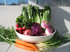 Heirloom Vegetable Garden Seeds 1.00 Each Free Shipping for Additional Packets