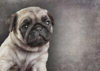 A1 Pug Puppy Drawing Poster Art Print 60 x 90cm 180gsm - Pencil Art Gift #15650