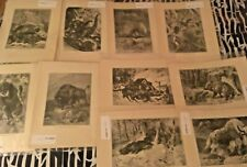 1 of 10-Friedrich Specht Mammal Prints 1885 From Animate Creation 45 total avail