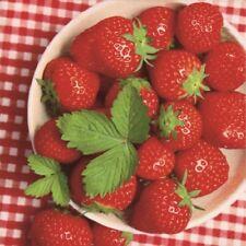 Strawberries Fruit Gingham 33cm Paper Party Napkins Serviettes 1-120pk Wimbledon