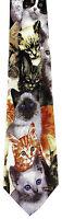 Kitten Faces Men's Neck Tie Cat Kitty Kittens Feline Pet Animal Gift Necktie
