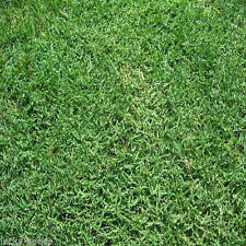 "Panama Bermuda Grass Seeds 2 Lbs ""ProTurf"" Covers-1000 Sqft  (Bulk Seed Package)"