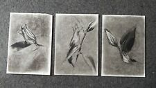 Original set of 3 charcoal drawings sketches of a Calla Lily triptych on paper