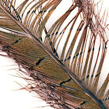 Cock Pheasant Knotted Tail -Natural