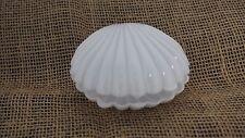 Plastic Sea Shells Scallop Concha Party Favor Decoration Box Wedding Clear White