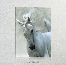 Cavallo bianco QUADRO SU TELA 70x50 cm STAMPA ANIMALI ARREDO UFFICIO SALA SALOTT