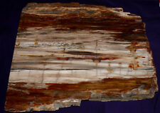 piastra legno pietrificato MADAGASCAR 7198g 405x345x25mm CAMINETTO DECORAZIONE