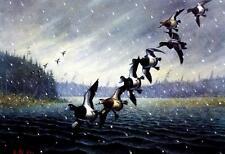 Les Kouba Foggy Morning Bills Duck Print Artist Proof  19.25 x 12..5