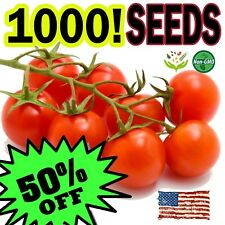 1000 Large Red Cherry Heirloom Organic Tomato Seeds Non-Gmo Sweet Tasty!