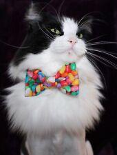 New Cat Jelly Beans Cotton Bow Tie & Breakaway Velvet Soft Collar Easter
